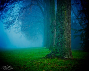 Forest Photography, Winter Fog, Nature Print, Trees, Colorful Landscape, Blue, Green, Fine Art, Woodland, Large Wall Art, Foggy, Vibrant Art