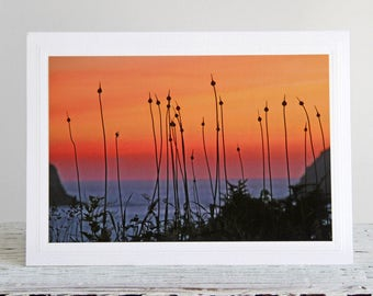 Seedpod Silhouettes at Sunset Photo Greeting Card, Nature Fine Art Photography, Sunset Over Pacific Ocean, Oregon Coast, Pacific Northwest