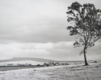 Antique/ vintage 1950s / 60s large hand developed, black and white photo of tree / fields scene - possibly the Lake District