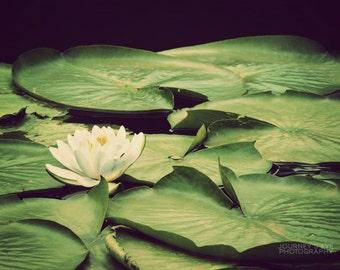 Fine art photo, nature photograph, lake, lilypad, flower photography, green, home decor, wall art - Water Lily