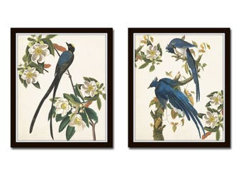 Blue Birds Print Set No. 1, Botanical Prints, Illustration, Wall Art, Prints, Giclee, Vintage Bird Prints, Audubon Bird Prints, Magnolia,