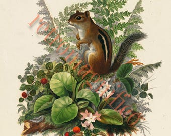 Cute Chipmunk in floral setting image from 1800's digital download art print, for framing, collage, mixed media, altered art,