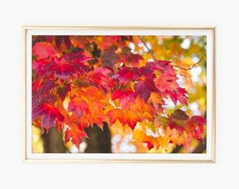 Autumn Print Download, Fall Leaves Photo, Fall Decor Prints, Fall Tree Wall Art Prints, Red Orange Decor, Large Printable Art, Nature Poster