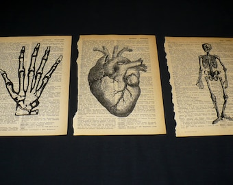 Human Body Set of 3 Dictionary Art Prints, Hand Heart Skeleton Anatomy
