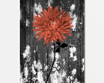 Rustic Modern Coral Gray Wall Pictures, Coral Wall Pictures, Bathroom Bedroom Coral Wall Picture  8x10 Matted to 11x14 White Mat