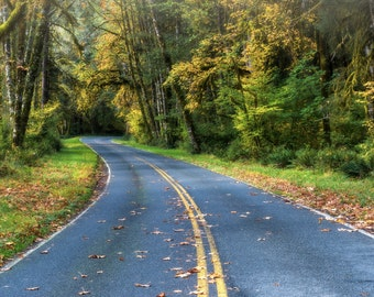 Hoh Rain Forest Road Washington State Olympic National Park Fine Art Photography Print Hiway Autumn Rain forest road
