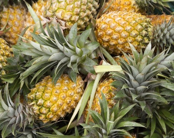 "Pineapple 'Elite Gold' (Ananas comosus), Live Pineapple Plant, 4"" Coconut Fiber Pot"