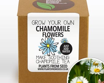 Grow Your Own Chamomile Tea Plant Kit