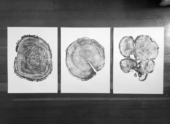 Set of 3 tree ring prints, Triptych wall art, Locust tree, Cedar tree, Pine tree, Christmas Tree ring art, Incredibly detailed tree ring art