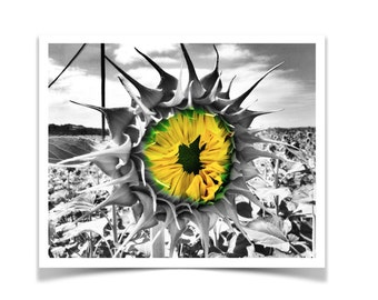Black and White with a Pop of Yellow and Green Sunflower Photo Print Poster. Wall Art. Home Decor. Gift for Nature Lover.