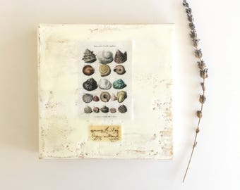Beach decor art, shell art, small original encaustic collage , 6x6, ready to hang art, cottage chic decor, small art