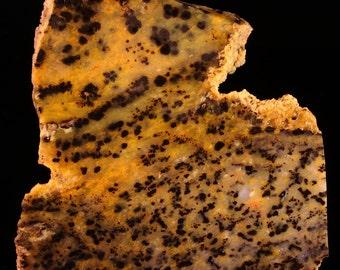 Beautiful Cheetah Agate Slab