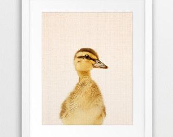 Duckling Print, Nursery Animal Decor, Baby Animal Wall Art, Duckling Photography, Baby Duckling, Nursery Decor, Kids Room Printable Art