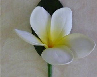 Single White Yellow Frangipani Buttonhole, Frangipani, Plumeria, Frangipani Boutonniere, Beach, Tropical, Wedding, Formal