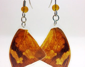 Real Butterfly Wing Earrings - Leafwing Butterfly