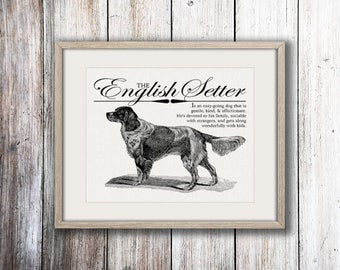 English Setter - A Retro - Vintage Style Dog Breed Wall Art Print for Dog Lovers With Dictionary Definition & Antique Illustration
