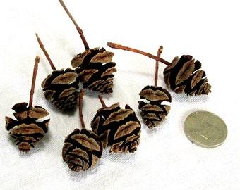 Tiny Pine Cones, Natural, Rustic, EBS00002