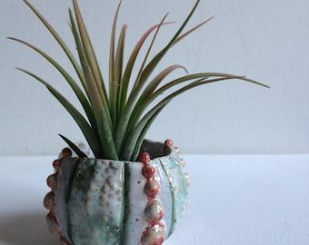Urchin air plant holder