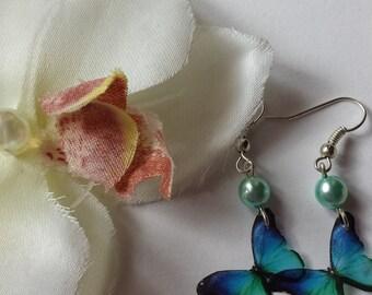 blue butterfly earring