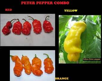Combo 10 seeds Each: Peter Pepper Red,  Yellow, Orange Hot XXX RARE hilarious gift! 30 seeds Total