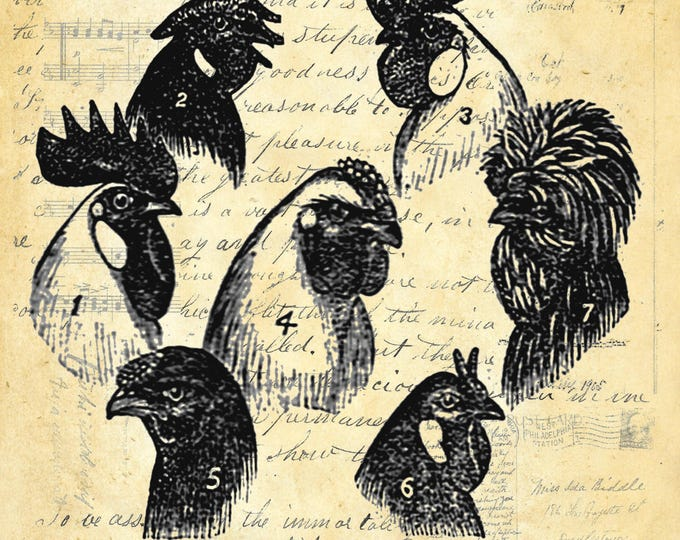 Chicken rooster head combs farmhouse print repro antique paper choice rustic industrial wall hanging gift CHI120