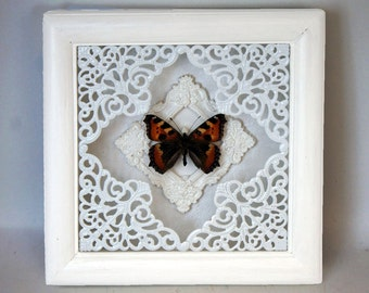 Insect taxidermy Small tortoiseshell moth butterfly Aglais urticae framed bug preserved beetle natural history collection