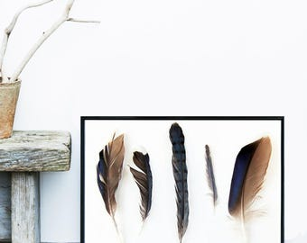 Feather print, Giclee Print, Minimalist Art, Feather Wall Art, Tribal Decor, Wall Art, Poster, Home Decor, Wall decor