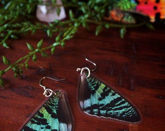 Real Butterfly Wings // Sunset Moth // Dangle earrings // Unique Gifts // Real Moth // Insect Wings