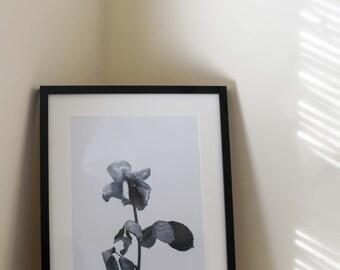 The Last Rose - Art Print