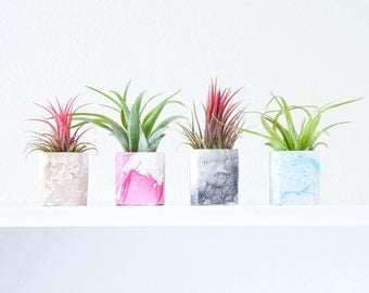 Marble Air Plant Holder, Natural Air Plant Display, Marble Planter, Low Shipping, Wedding Favors, Gifts Under 10