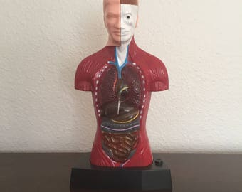 Vintage Desktop Anatomical Model With Light Up Heart