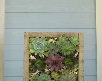 Rustic Handmade Vertical Garden / Living Wall / Wall Planter for Succulents + Cactus / Light Weight