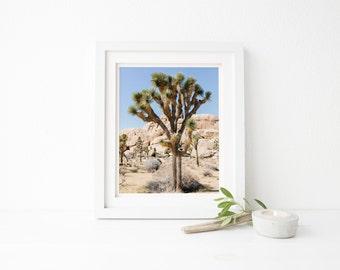 joshua tree photograph, joshua tree photo, desert photography, desert landscape photo, desert joshua tree photo