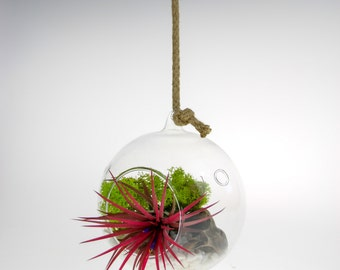 Air Plant Terrarium Kit in glass Globe | Cute & Vibrant Design that can be seated or hung | Plant Gift ideas