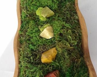 Unique preserved moss center piece