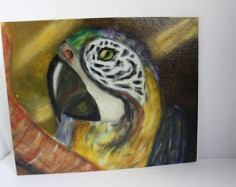 Wall art, African, Parrot, Safari, tropical, exotic, colorful Parrot painting, Acrylic,