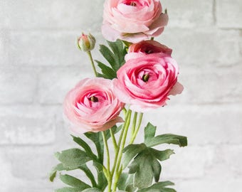 Pink Ranunculus Flower Bunch