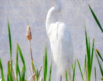 The Calling - INSTANT DOWNLOAD - Egret