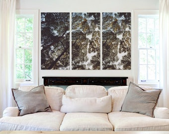 Sunlight, Tree Tops - Canvas Art