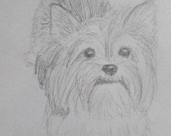 Pencil sketch pet portrait 5x7 in