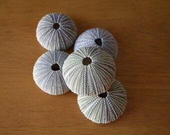5 Sea Urchin Shells for Crafts, Home, Wedding, Nautical Decor