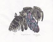 Linocut print of Native North American Leafcutter Bee Megachile Brevis on Japanese Papers - Bee Biodiversity Collection