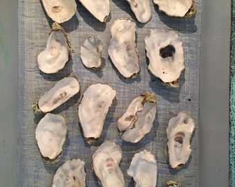 Oyster Shells, 20 Shells, Natural Seashells, Seashell collection, Shells for Centerpiece, Beach House, Curiosities, Display, Photo prop