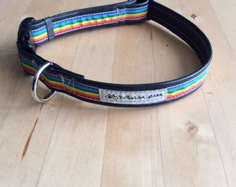 Standard Collar- medium to large dogs