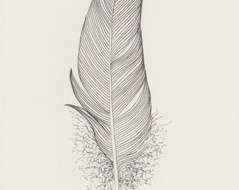Original ink feather drawing ~ strong black feather