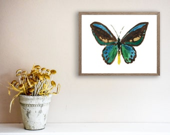 Butterfly print, Jade Teal Butterfly art print, butterfly watercolor print, Jade brown, tropical, nature art, nursery decor, home and living