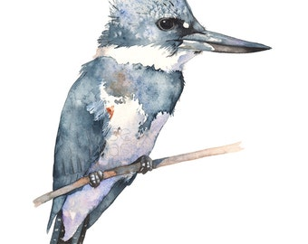 Belted Kingfisher watercolor print, A3 size, BK16817, Belted Kingfisher watercolour painting print, bird wall art, US bird print