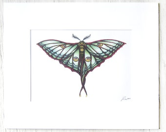 Matted Moth illustration, artist print, entimology study, colorful inset