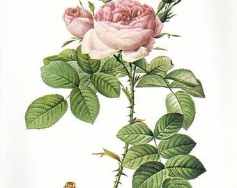 Perfumer's Rose art print vintage antique wall art pink flower art print Victorian art print antique rose art rose print prints 82