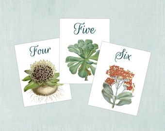 Succulent  Wedding, Table Number, Succulent Numbers, Succulent Table Card,  Succulent Wedding Cards, Succulent place card, tent, S101